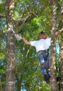 S&J Tree Care Service Arborist Working on a Tree