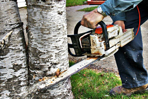 s-and-j-tree-care-tree-service cutting a tree