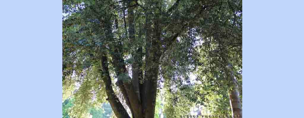 Tree-Top