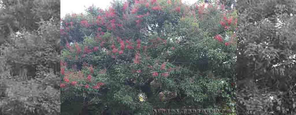 Flower_Tree_BW