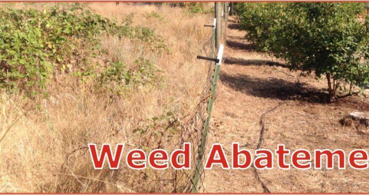 weedsBgone