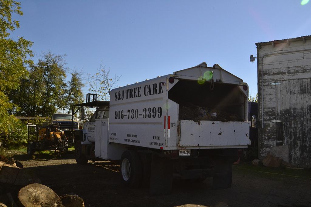 natomas-tree-removal
