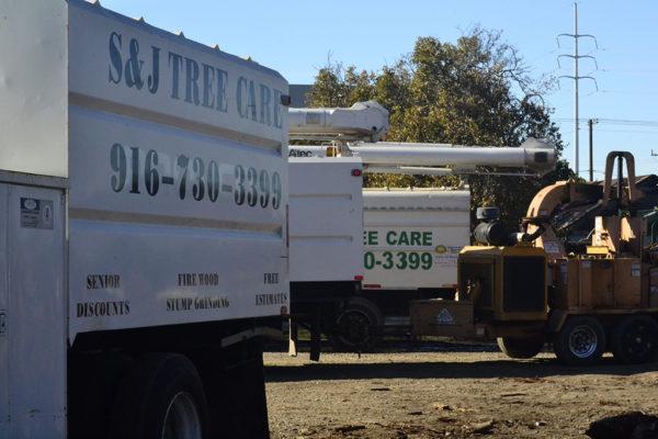 Tree stump service Sacramento